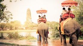 Elephants in Ayutthaya